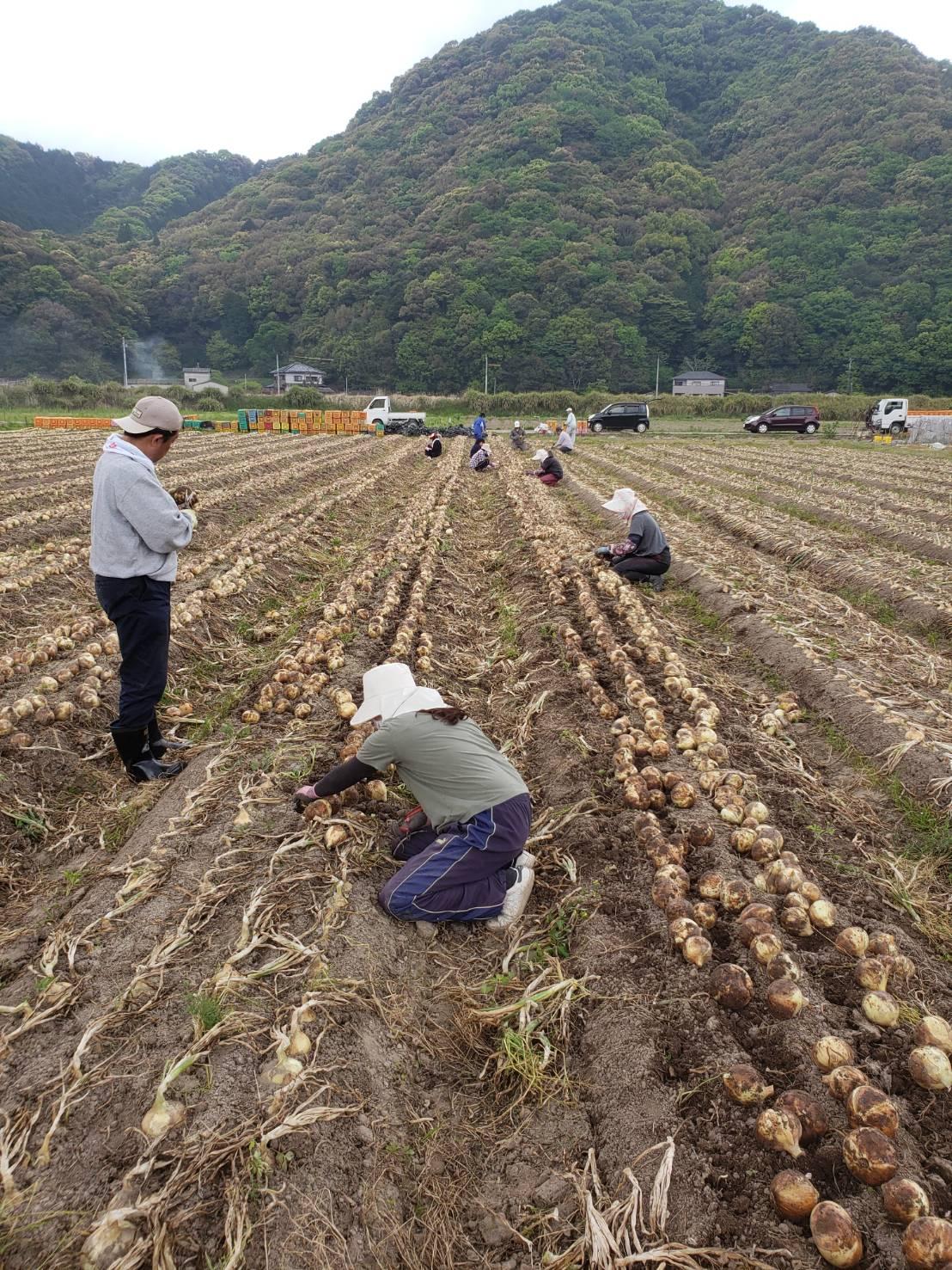 農園 熊本県天草市 磯田農園