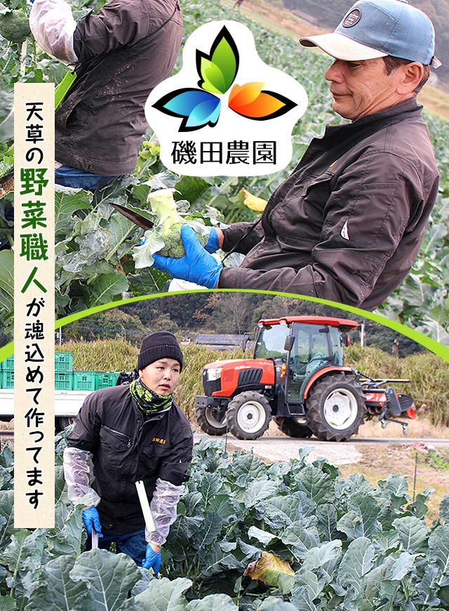 天草の野菜職人が魂込めて作ってます