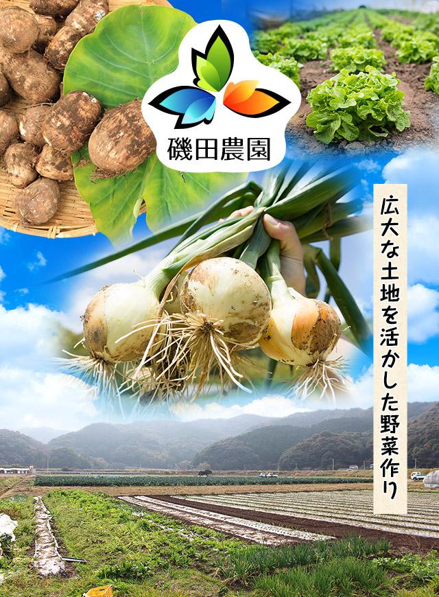 広大な土地を活かした野菜作り